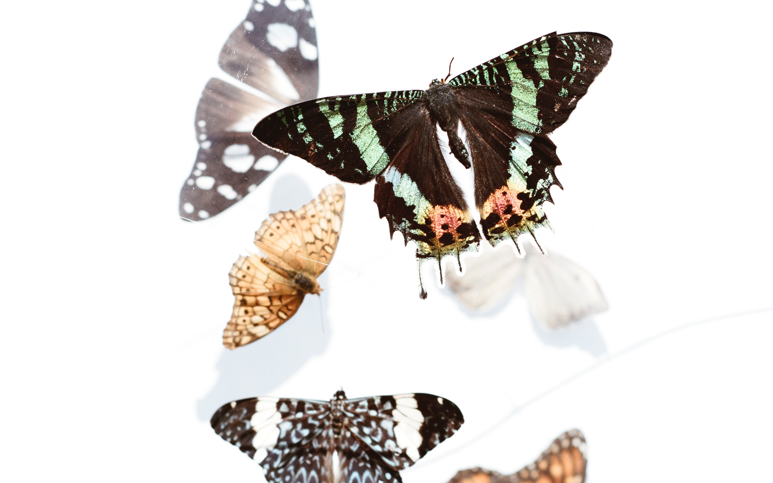Breeding butterflies: how to create high-impact accelerated growth